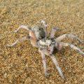 新たな砂丘観光・鳥取砂丘の虫たち